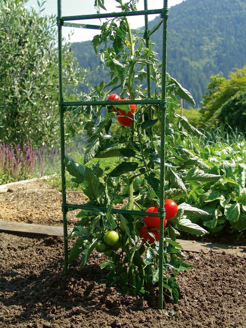 sostegni per piante per pomodori