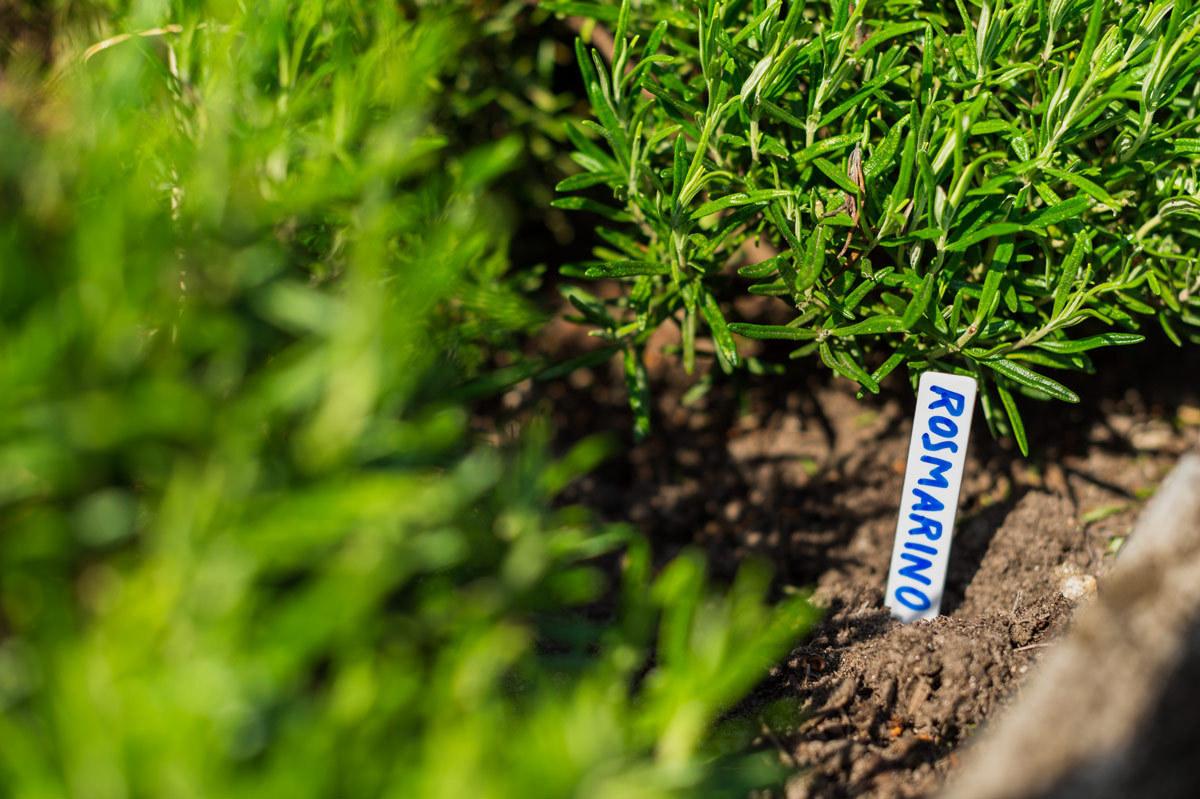 Vasi In Plastica Per Piante Prezzi : Etichette per piante cm in plastica robusta